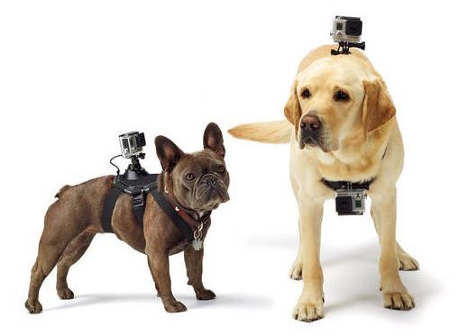 GoPro_Dog_Mount_image